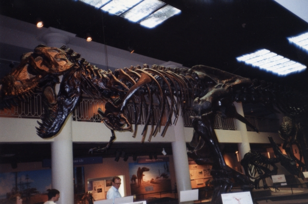 T. rex at the Academy of Natural Sciences