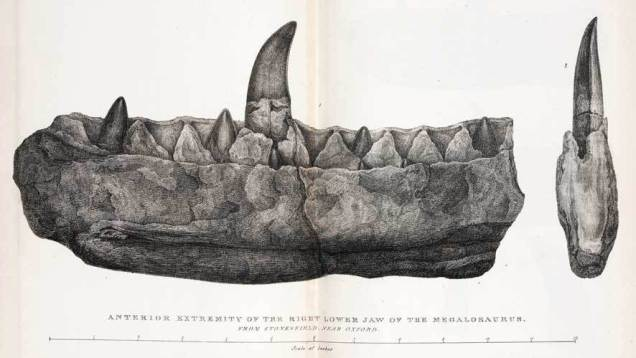 Megalosaurus Jaw Illustration