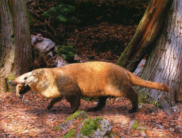by Julius Csotonyi / Prehistoric Mammals Pinterest