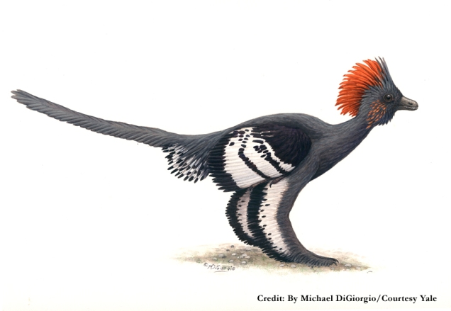 Anchiornis huxleyi / Science Codex