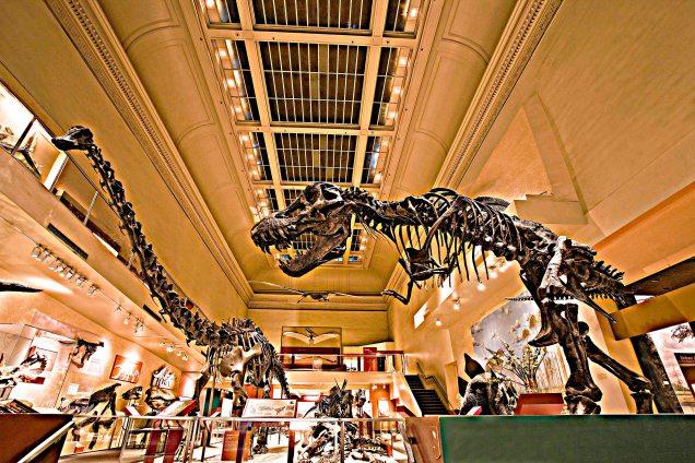 Smithsonian Insider