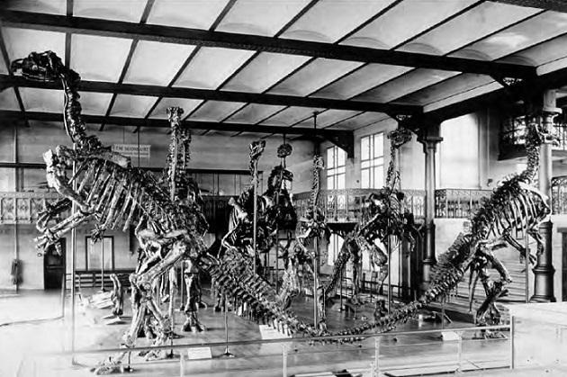 Dollo's Iguanodons / Letters from Gondwana