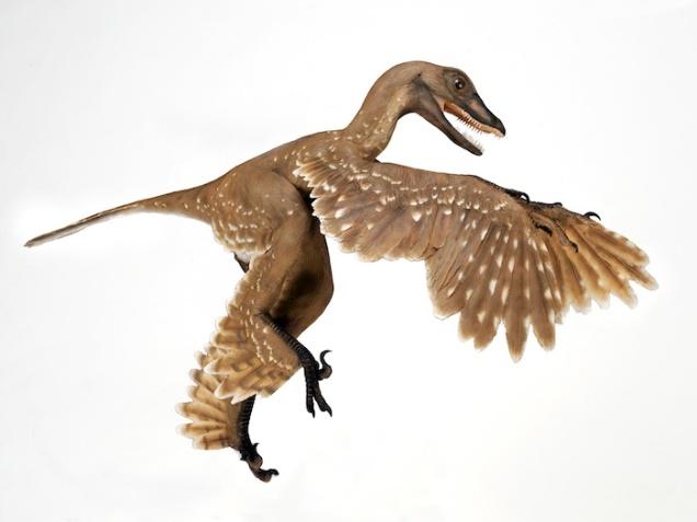 Sinornithosaurus / AMNH